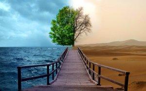 half-life-tree