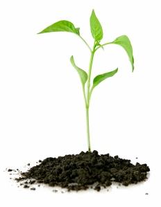 plantsmall
